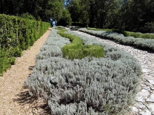Rosemary garden